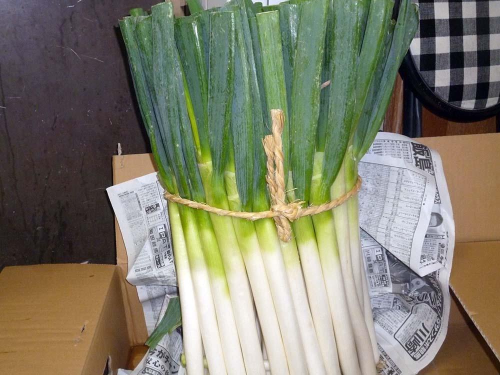 「千寿葱」が到着しました。